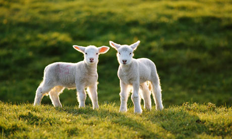 the slaughtered lamb parable